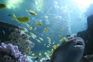 Wo das Wasser nie zu Eis wird: Sea Life