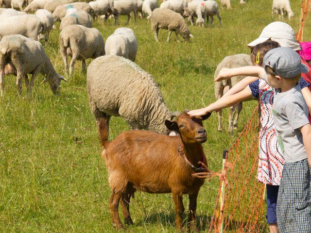 Schafe und Ziegen im Englischen Garten, Foto: Katy Spichal
