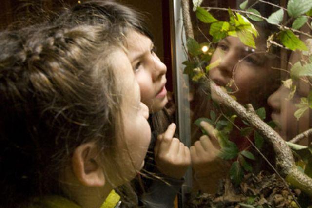 Kinder- und Jugendmuseum Dschungel-Ausstellung, Foto: Kinder- und Jugendmuseum