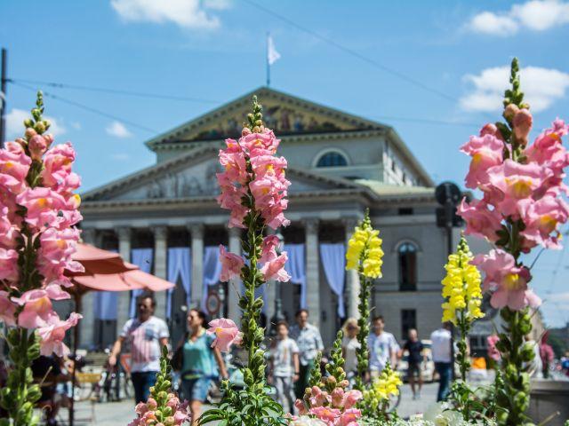 Sommer am Max-Joseph-Platz, Foto: muenchen.de/Michael Hofmann