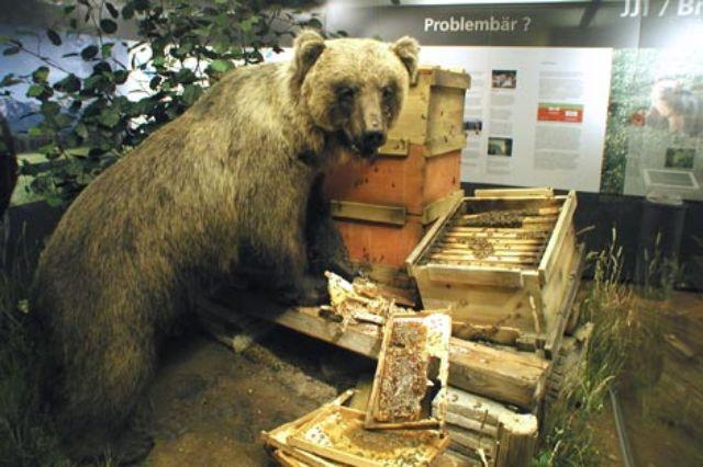 """""""Problem""""- Bär Bruno beim Honigklau, Foto: München Tourismus"""
