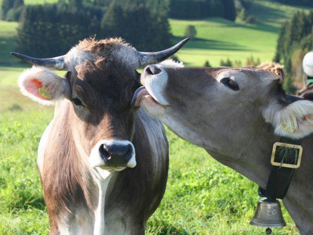 Füssen im Allgäu, Foto: Füssen Tourismus und Marketing/Stöger