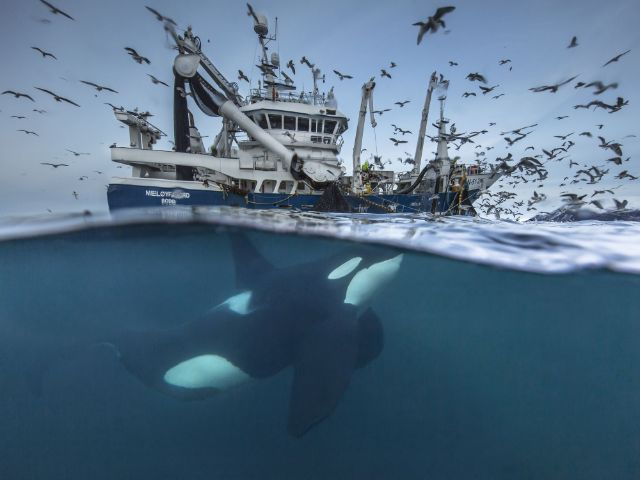 "Bild aus dem Wettbewerb ""Wildlife Photographer of  the Year""., Foto: Audun Rikardsen/Wildlife Photographer of  the Year"