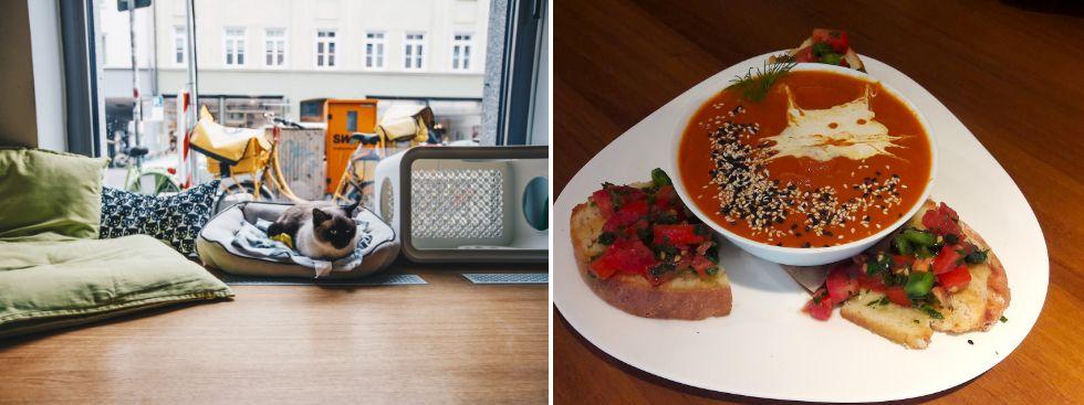 Katzentempel, vegan, restaurant, cafe, Foto: Lionman