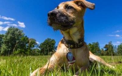 Hund mit Hundemarke